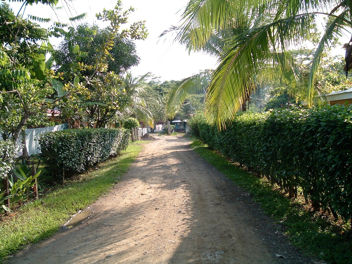 The road leading to the house.
