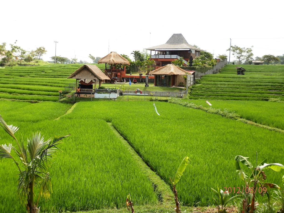 3 BR VILLA+BUNGALOW on ricefields