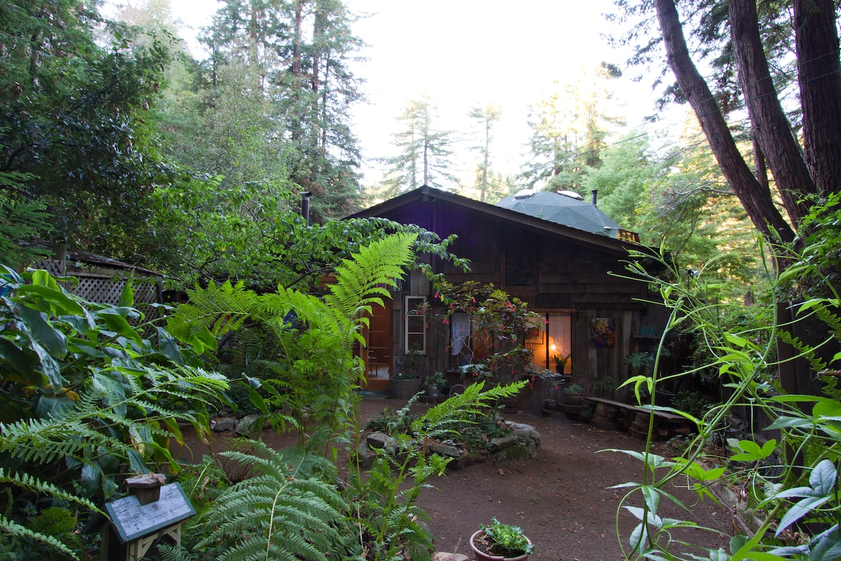 Calla Lilly Cottage in the Redwoods
