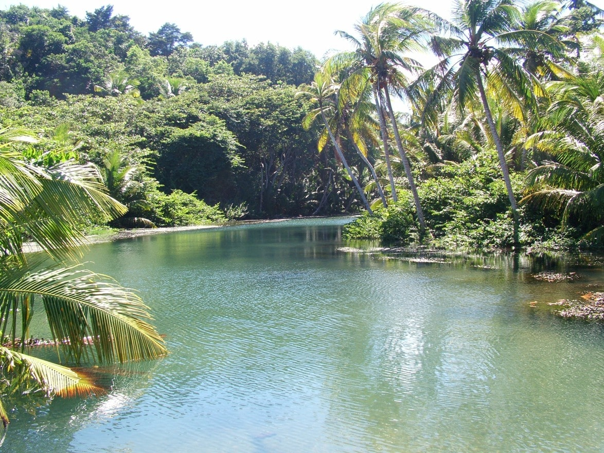 The Hodges river just below us... a great place to rinse off the salt after a dip in the ocean.  Drinkable-quality water!