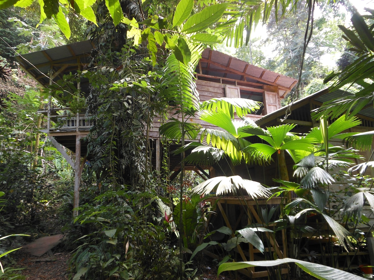 Monkey Mood Homestay from the outside