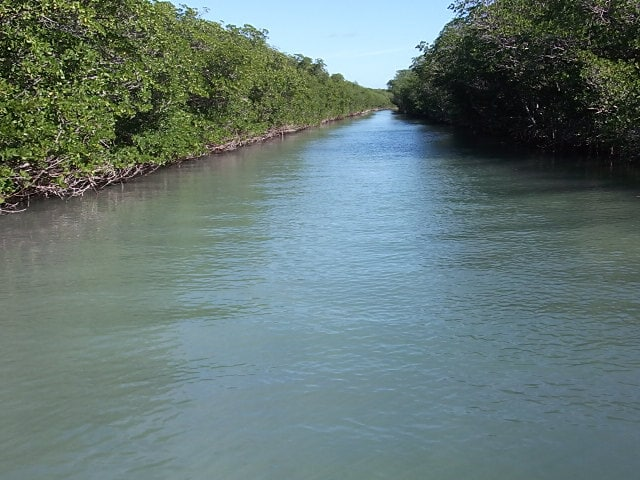 Mangrove islands accessible by kayak