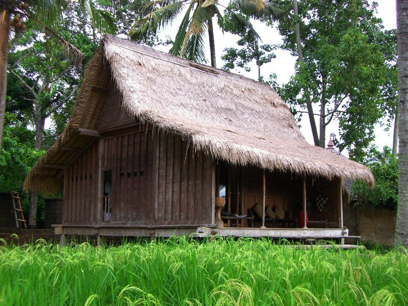 The House, with its thatched roof. Rice Paddy field foreground
