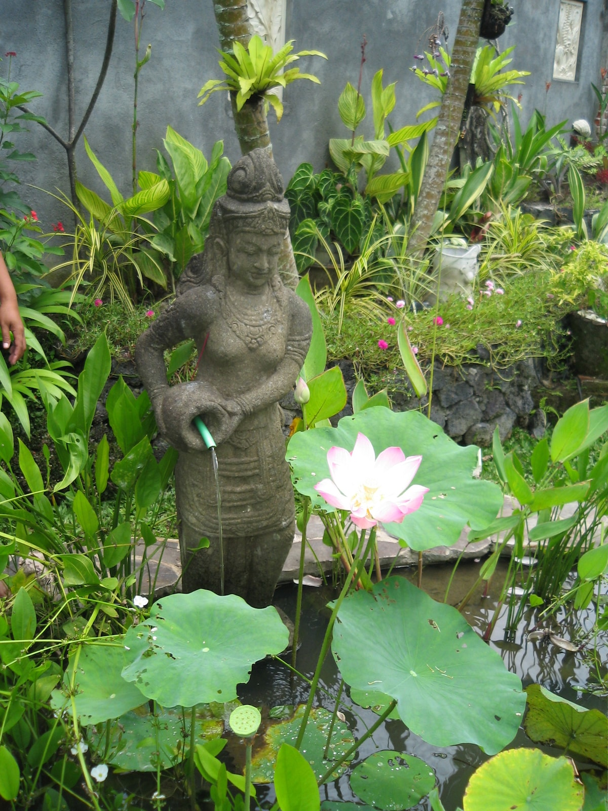 Goddess and lotus pond.
