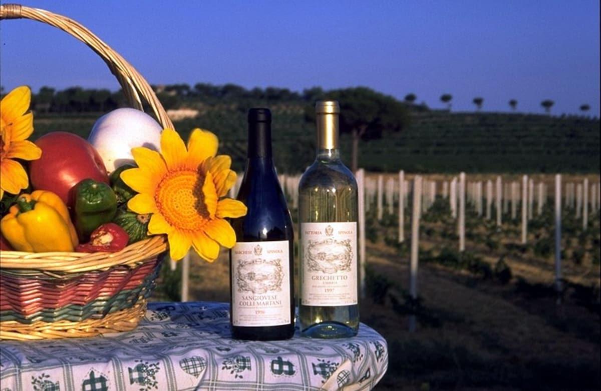 i prodotti dell'orto bio gratis ed il vino della Fattoria