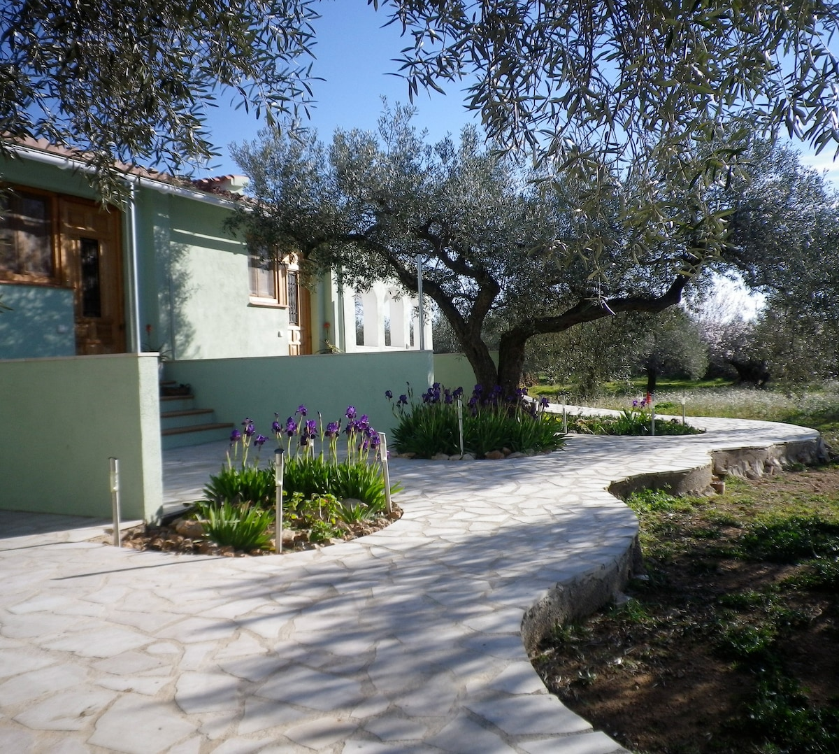 Looking down the path to some of the olives.