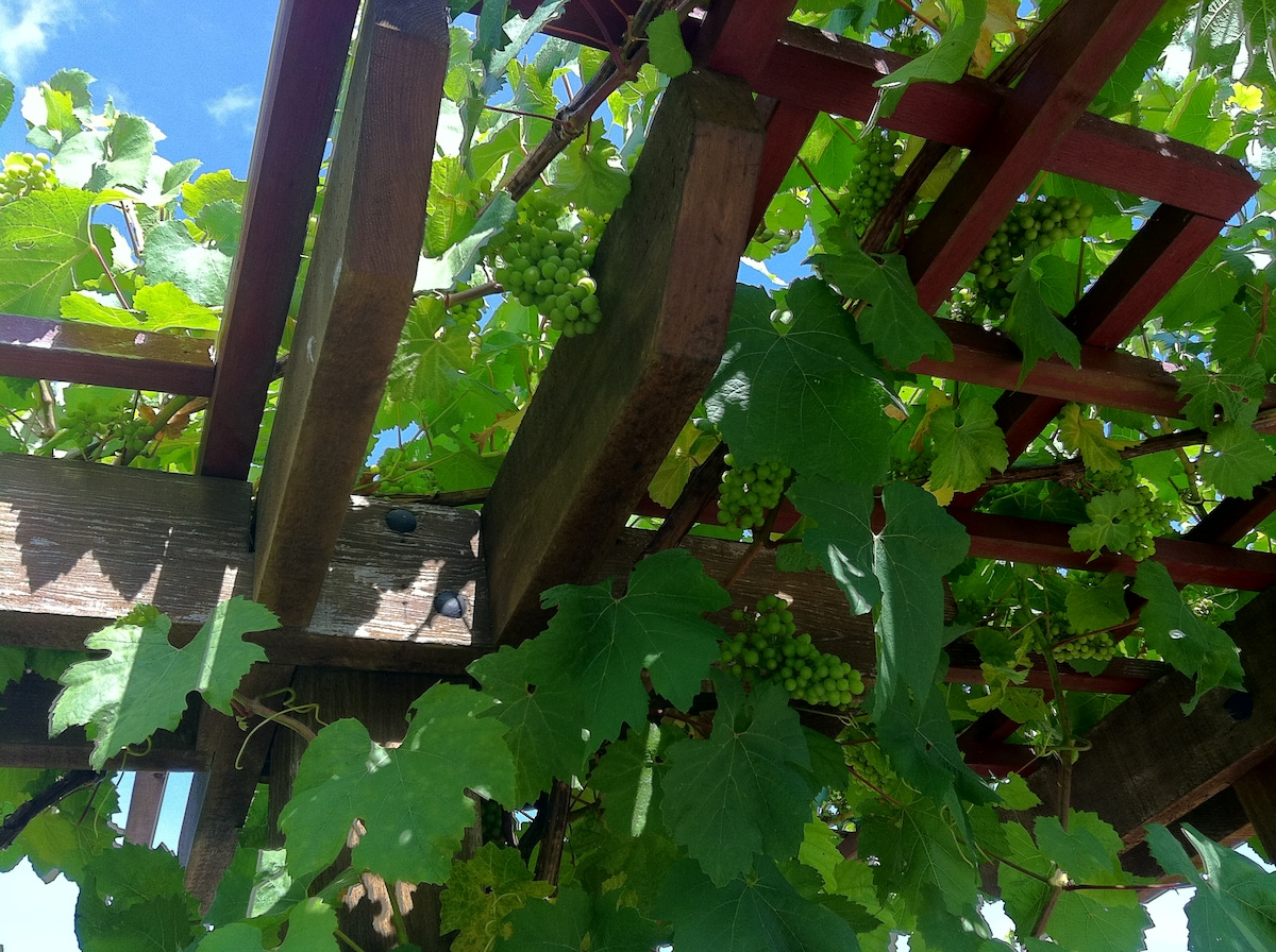 Delicious table grapes.