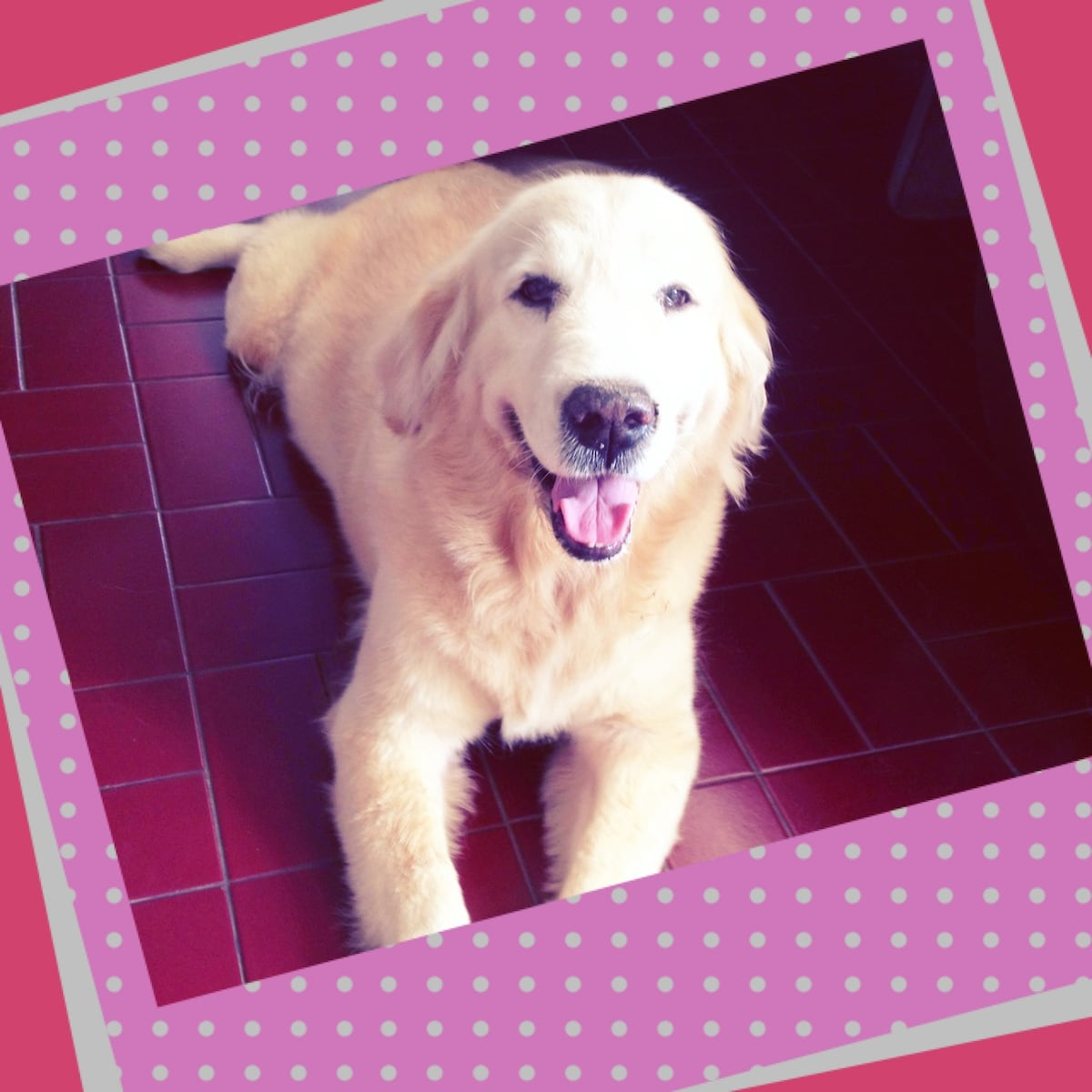 Our lovely and friendly golden retriever