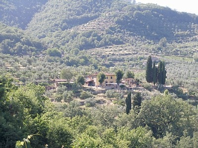 chianti, La Pruneta, olives, vines.