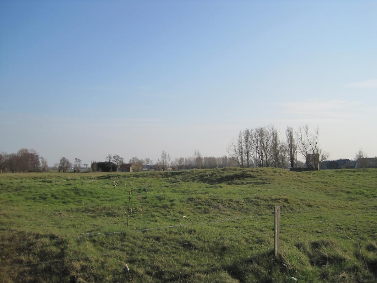 Uitzicht op de oudste duinen van België, de konijntjes en koetjes komen jullie groeten!
