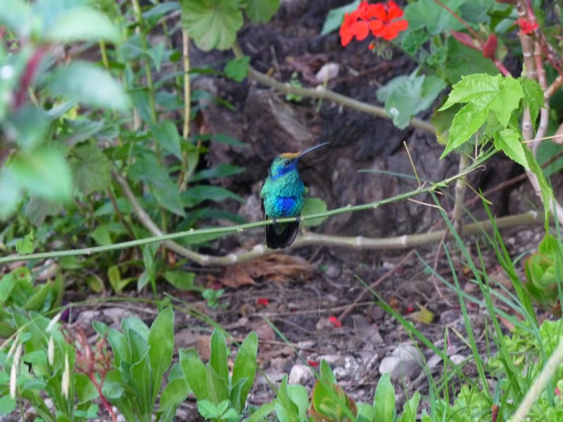 Hummingbird spotted in the surrounding gardens