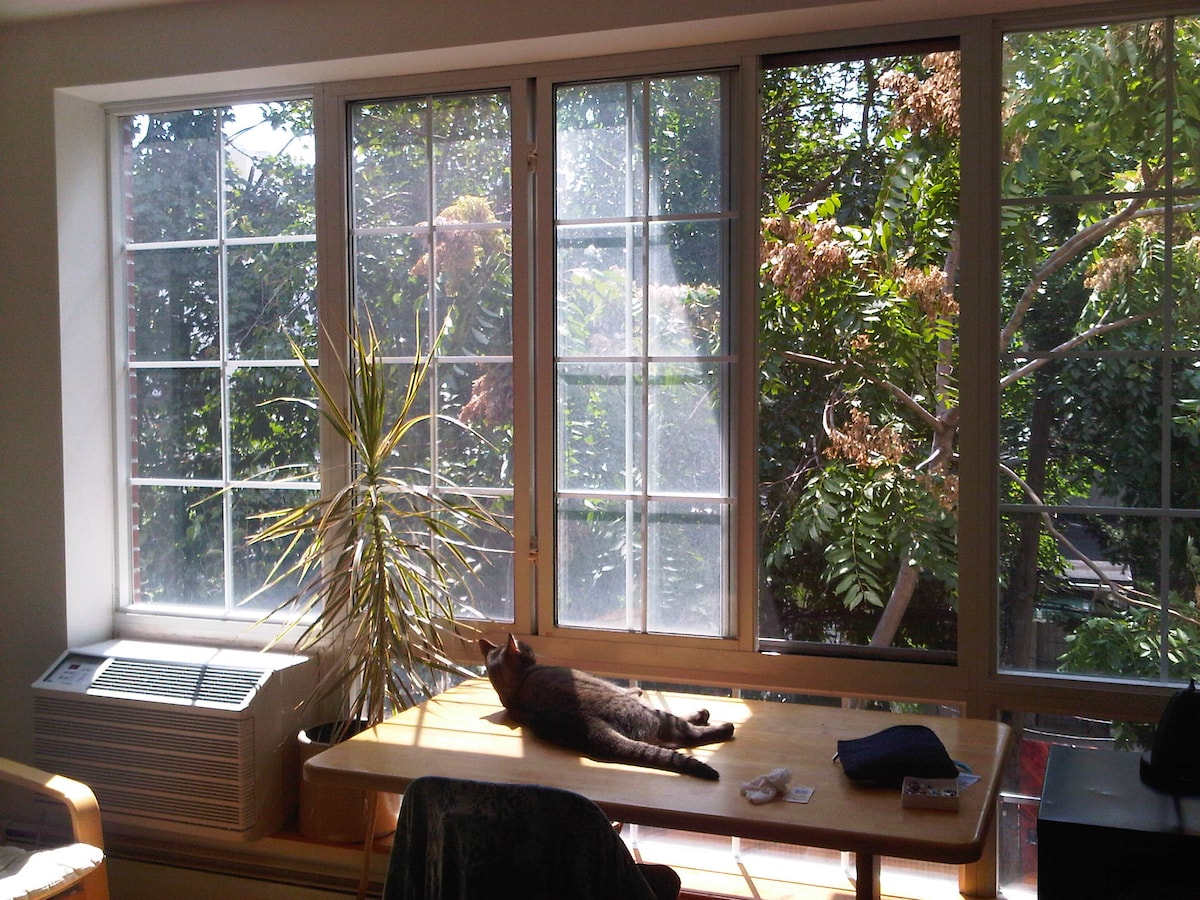enjoying the view from the downstairs bedroom - a tree does grow in brooklyn!