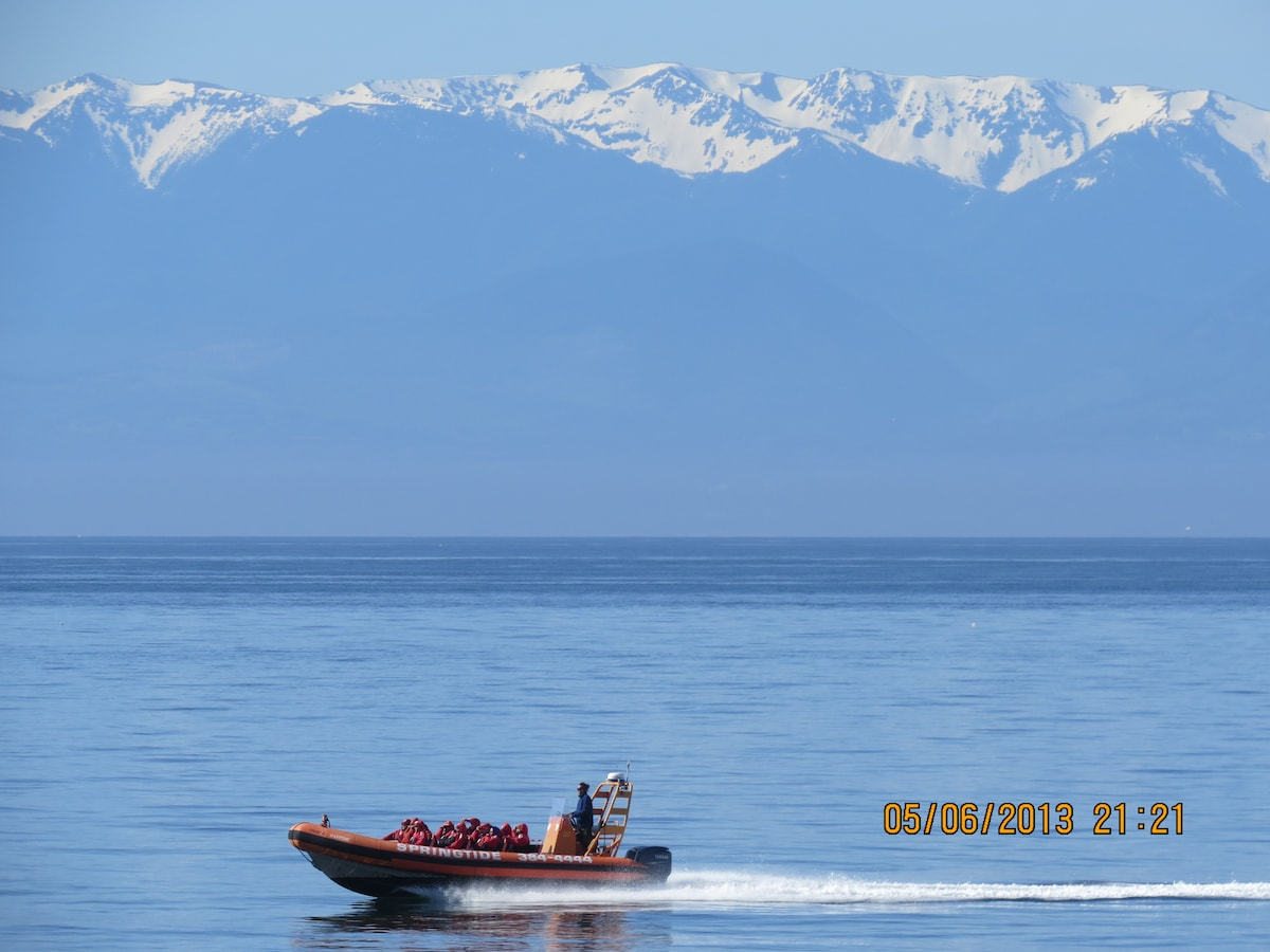 watch the whale watching boats go by, or book it from downtown for your own adventure.