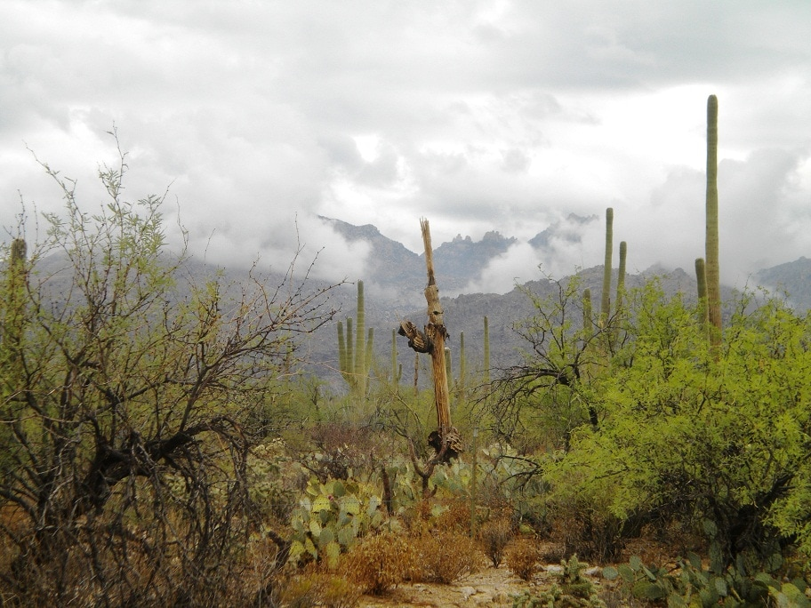 Bear Valley trail looking at the Catalina Mountains during Monsoon Season