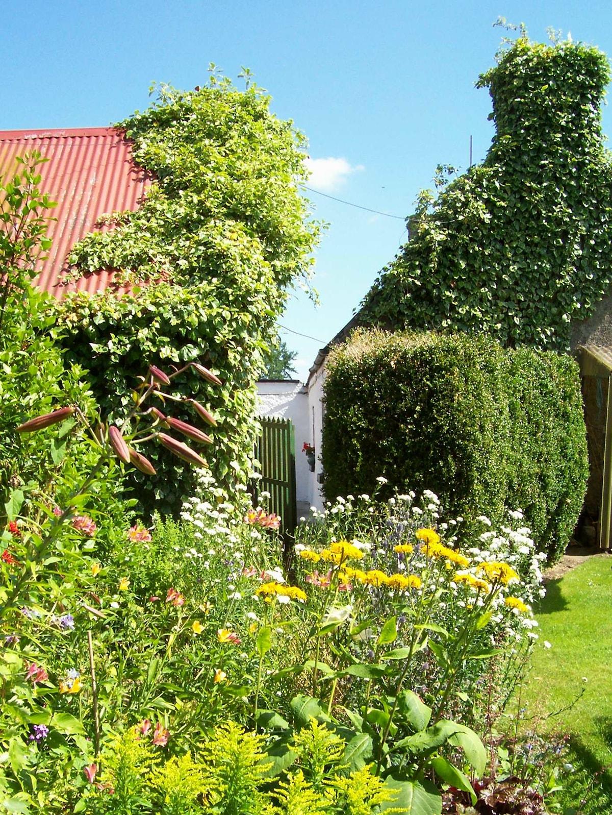 Garden in summer time.