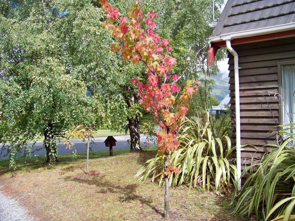 BeechTree Cottage, Wanaka, Otago NZ