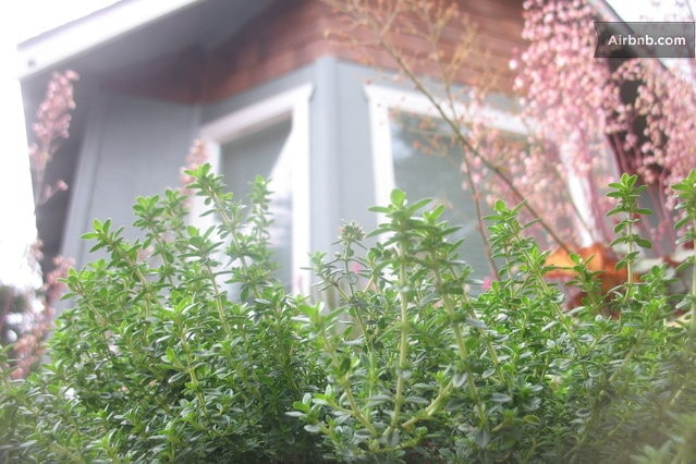 Front of house with some fresh Rosemary to add to your salad.