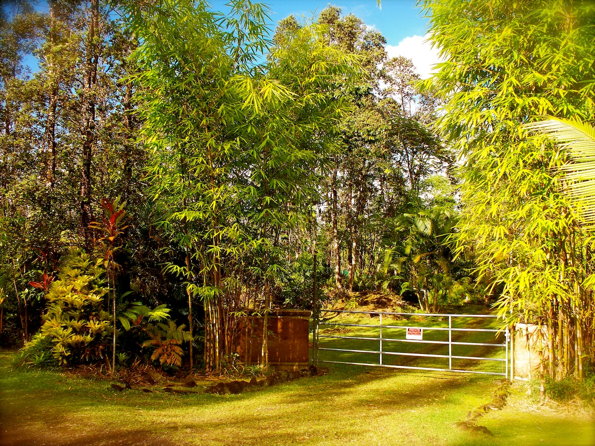 The entrance from the road to the rainforest hideaway.  Rammed earth walls, fronted by 35 ft. bamboo, ti, bromeliads and other tropicals.  The house is set back aprox 200ft.  from the road.