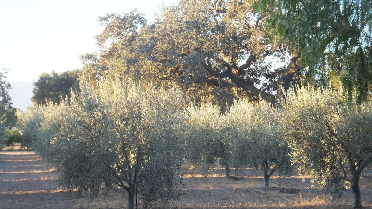 view of olive orchard