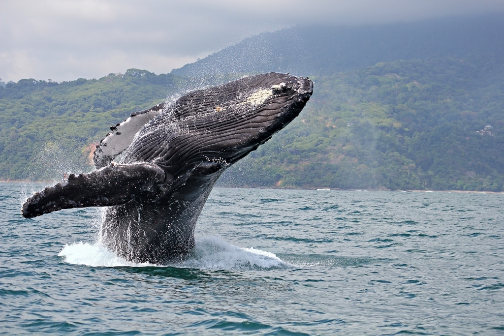We can get you a tour to see Humpback whales, Dolphins, Leatherback Turtles and more.