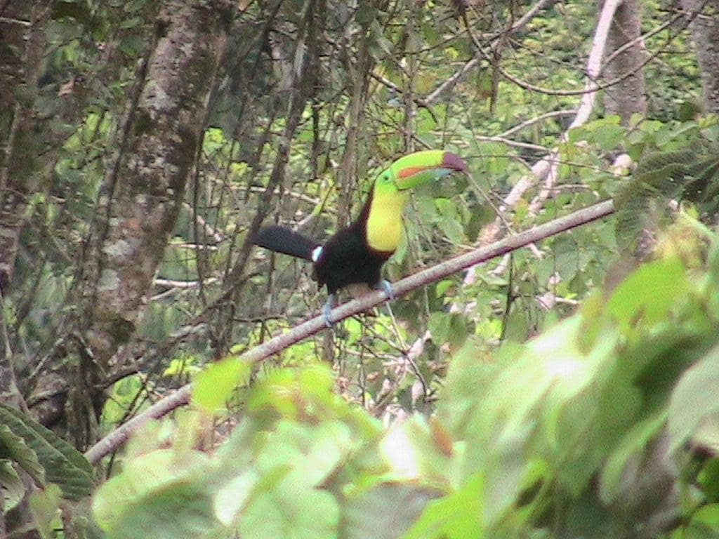 Toucans visit here