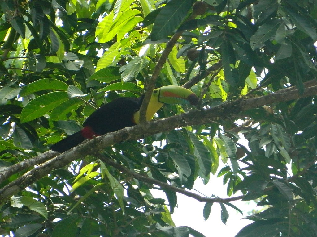 A toucan visitor