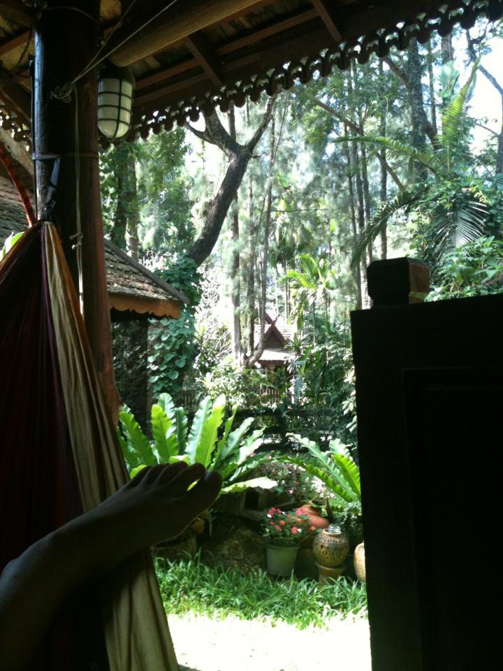 view from your hammock