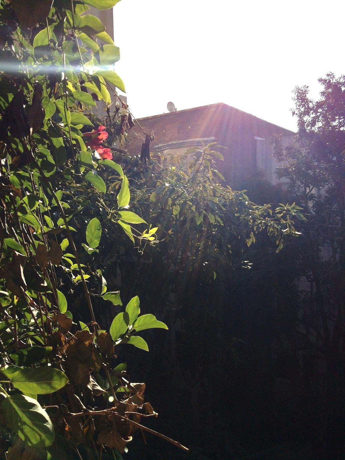 Charming Nob Hill Studio w/ garden