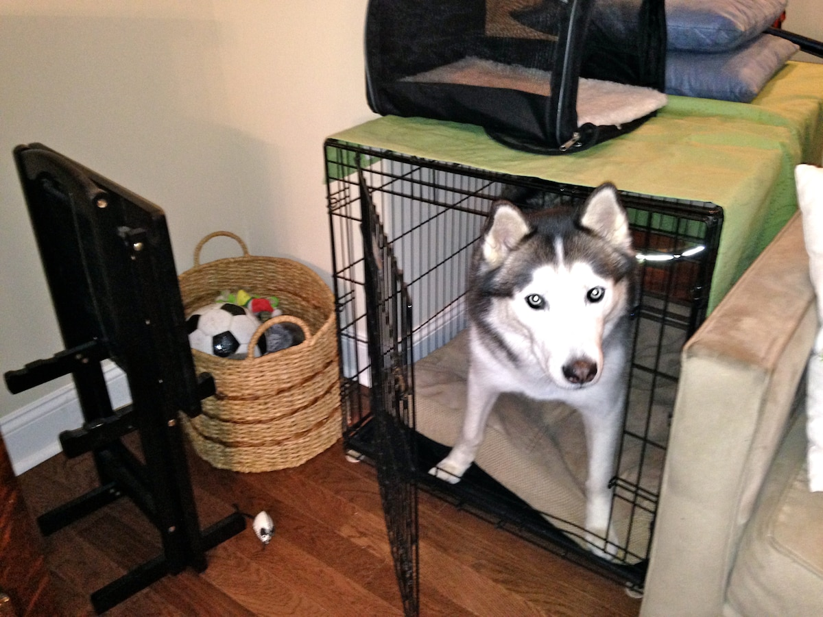 Sammie gets along well with other dogs and loves to have friends come over and play! When everyone is away for the day, the crate can be moved into the bedroom and all of the animals will be separated to relax until their people return!