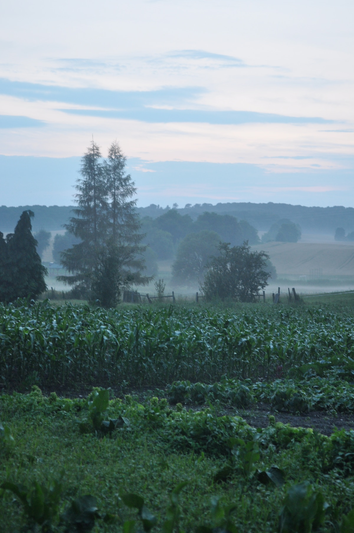 Gorgeous evening fog settling over the land behind the house