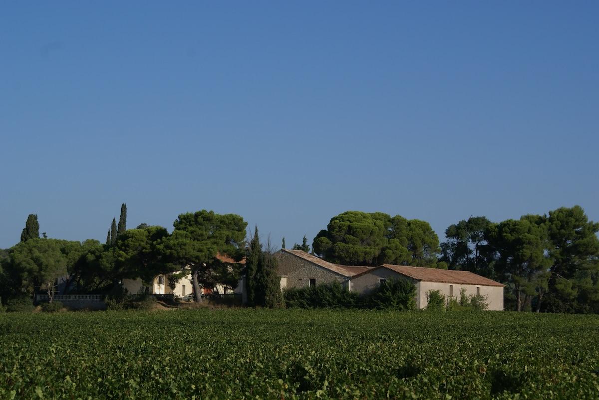 Gite dans domaine viticole
