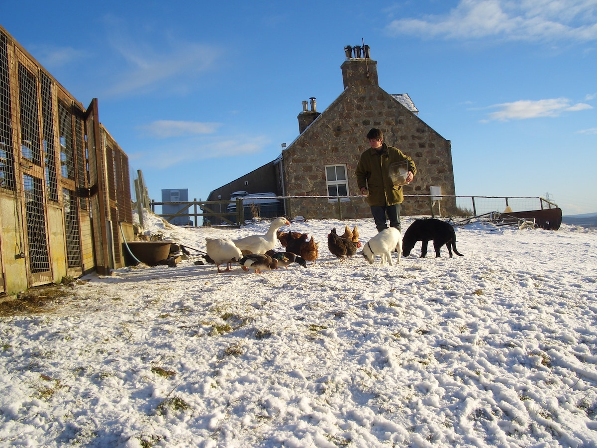 Feeding the the flock (and the dogs)