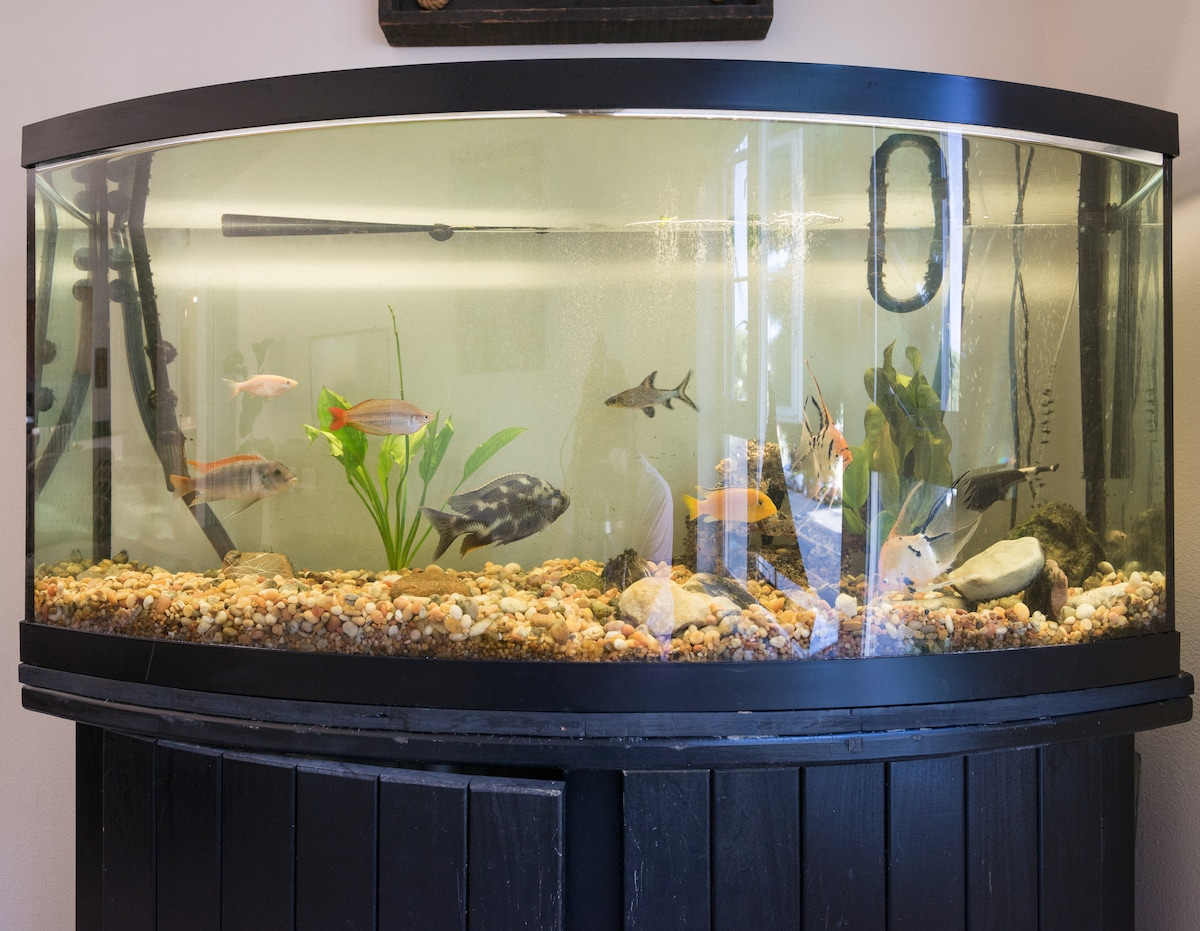 80 Gallon fish tank with awesome fish