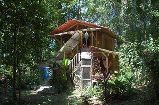 Jungle house in cocles
