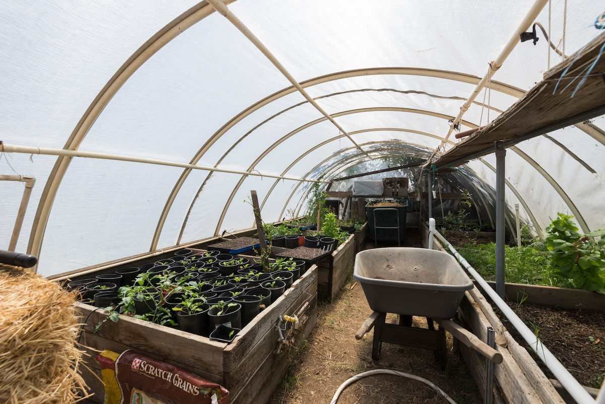 The greenhouse is part of our gardening.