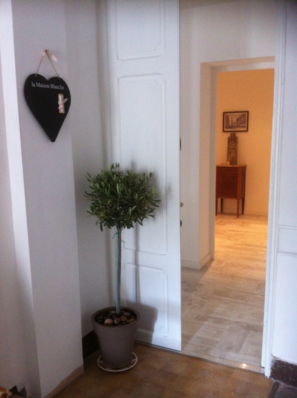 An Olive tree is the sign of peace, come in and revive