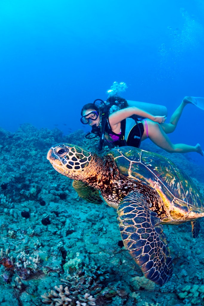 swim with turtle activities