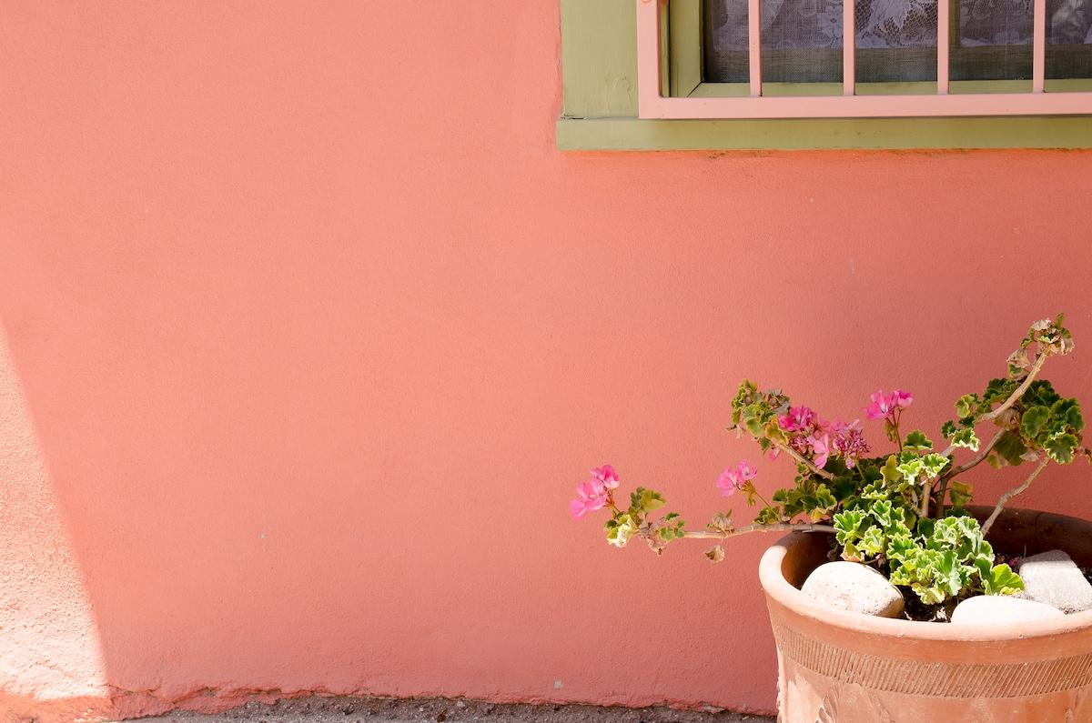 Front yard geranium.