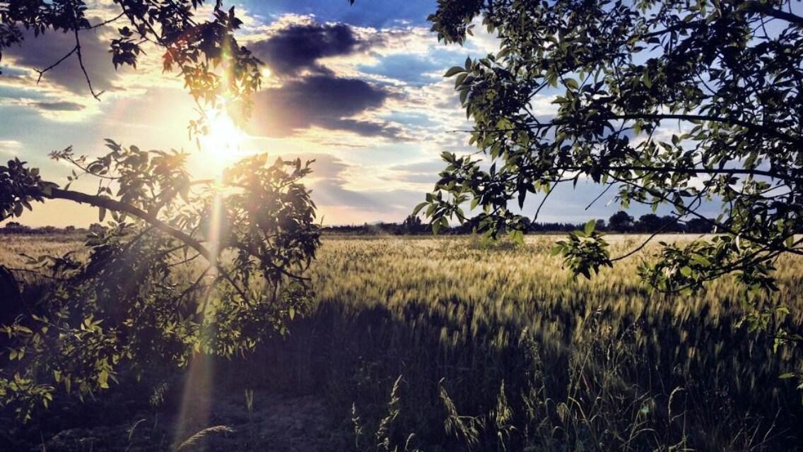Photo prise de l'espace détente et lecture situé dans le près face au champs de blé