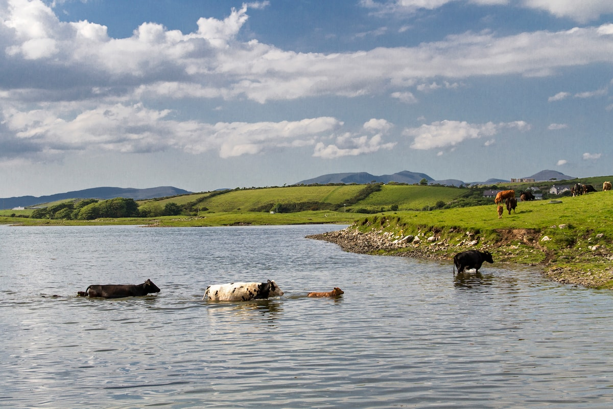 Cattle cooling off!