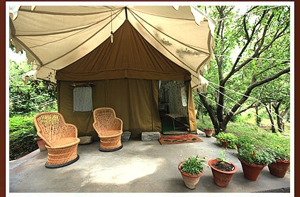 Exotic swiss tent house in Manali
