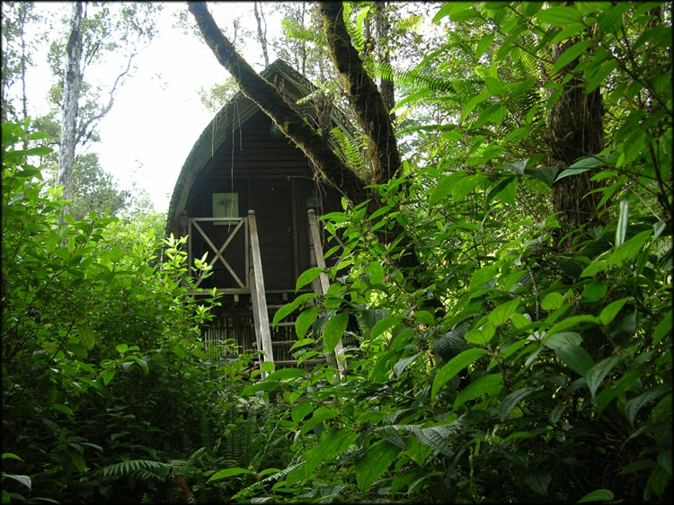 Bali Hut Treehouse