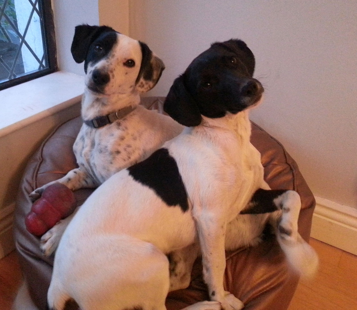 Caesar and Coco look forward to meeting you!