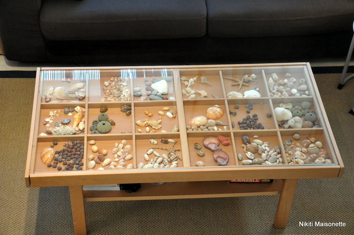 mother's precious shells collection