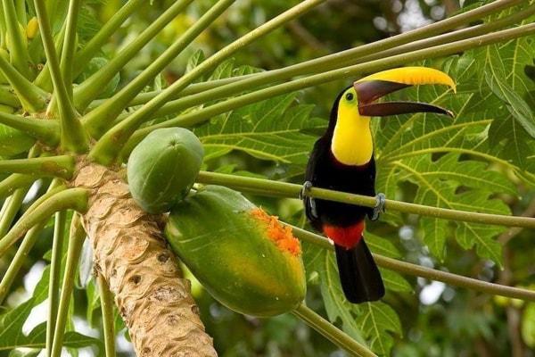 Toucan  - Hotel La Palapa Ecolodge Resort - Quepos - Costa Rica