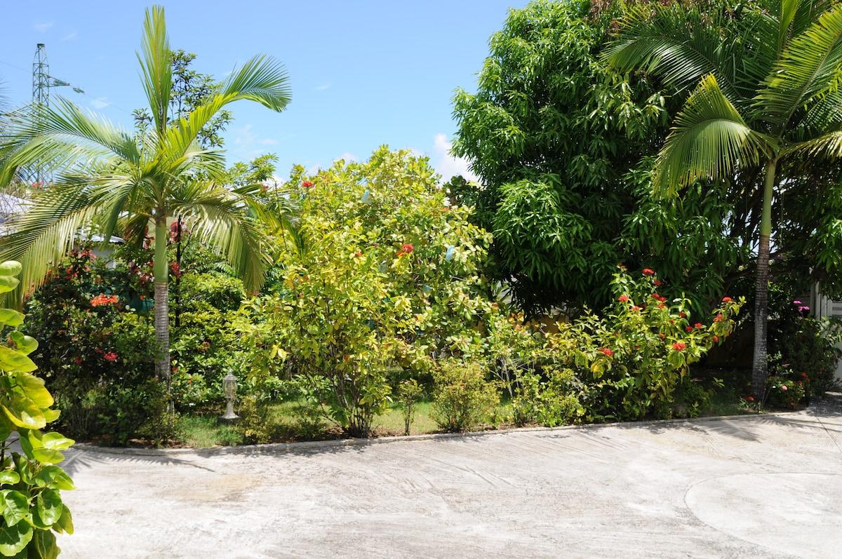Vue dans le jardin sur le cocotier, manguier, etc...