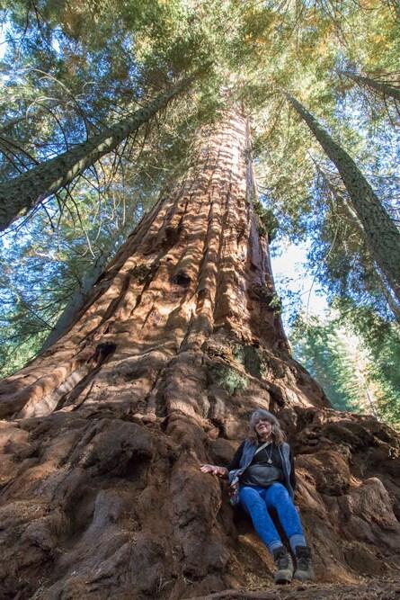 ~ Giant Sequoias, Too ~