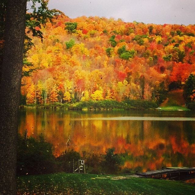 Fall foliage - (phone number hidden)
