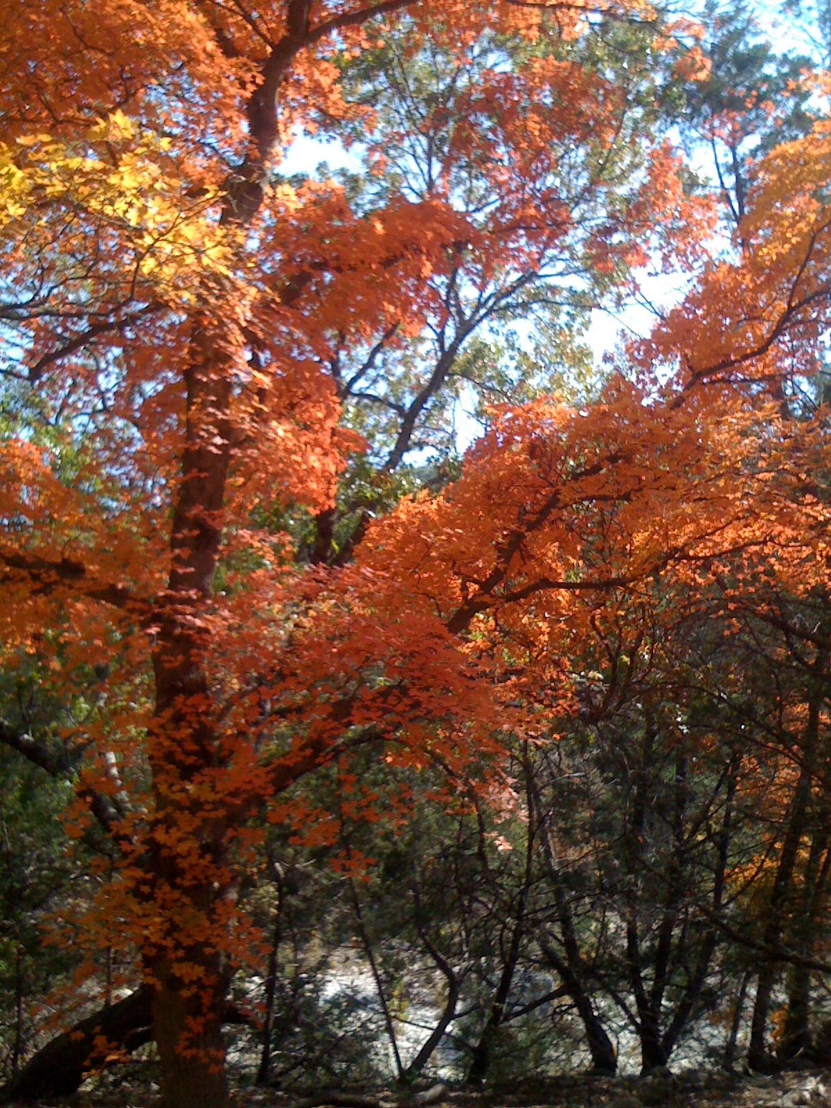 Lost Maples State Park 8 mi north of our house. Modest hiking trails and challenging trails. Home to the beginning of the Sabinal River.
