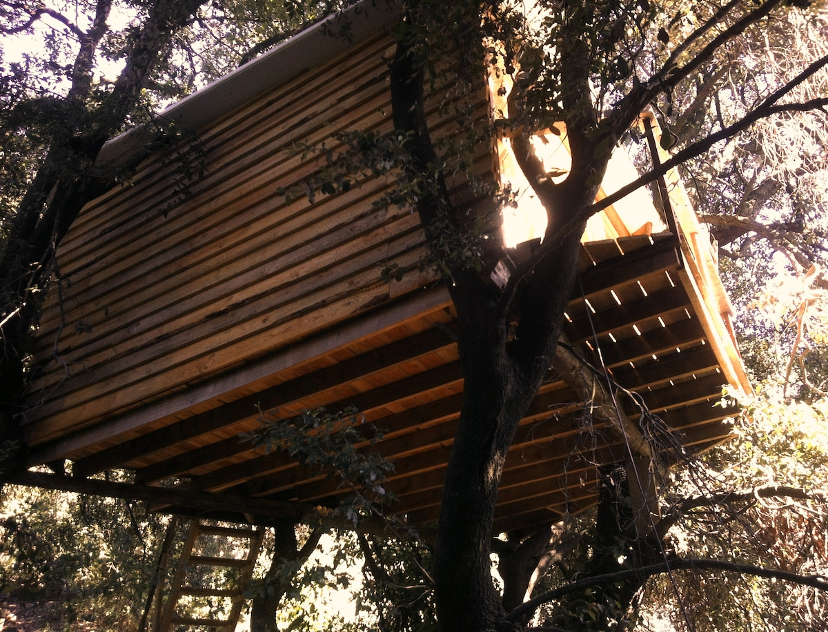 Tree House Barcelona